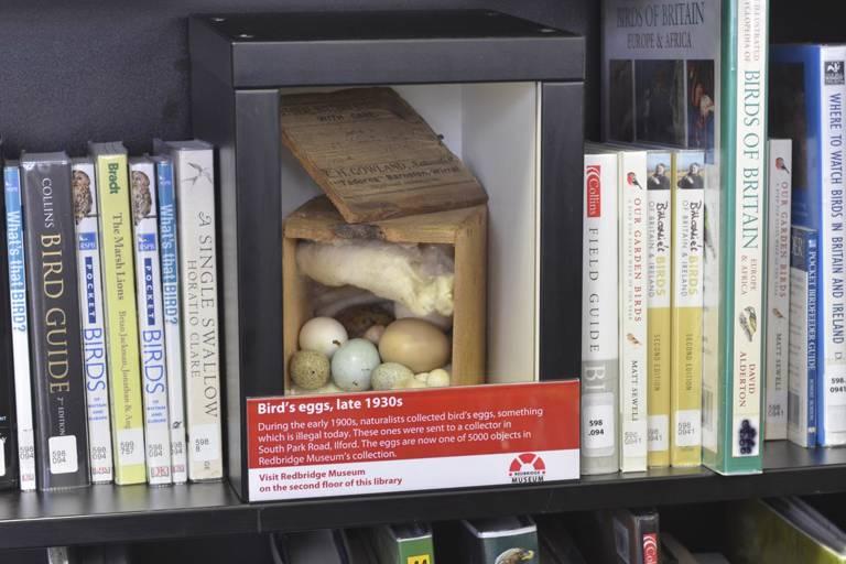 Bird's eggs display
